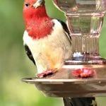 Birding in Liberty County