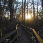 5 Amazing Liberty County Walking Trails You Need to See