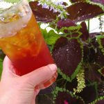 A Sun Tea Recipe Perfect for Celebrating National Iced Tea Day