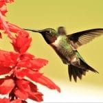 Springtime Birding in Liberty County