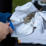 Our Easy How-To Guide on a Classic Liberty County Holiday Oyster Roast