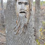 Discover the Mysterious Tree Spirits of Liberty County