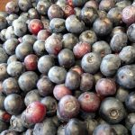 Our Tips & Tricks on Making the Most of Your Next Blueberry Picking Adventure