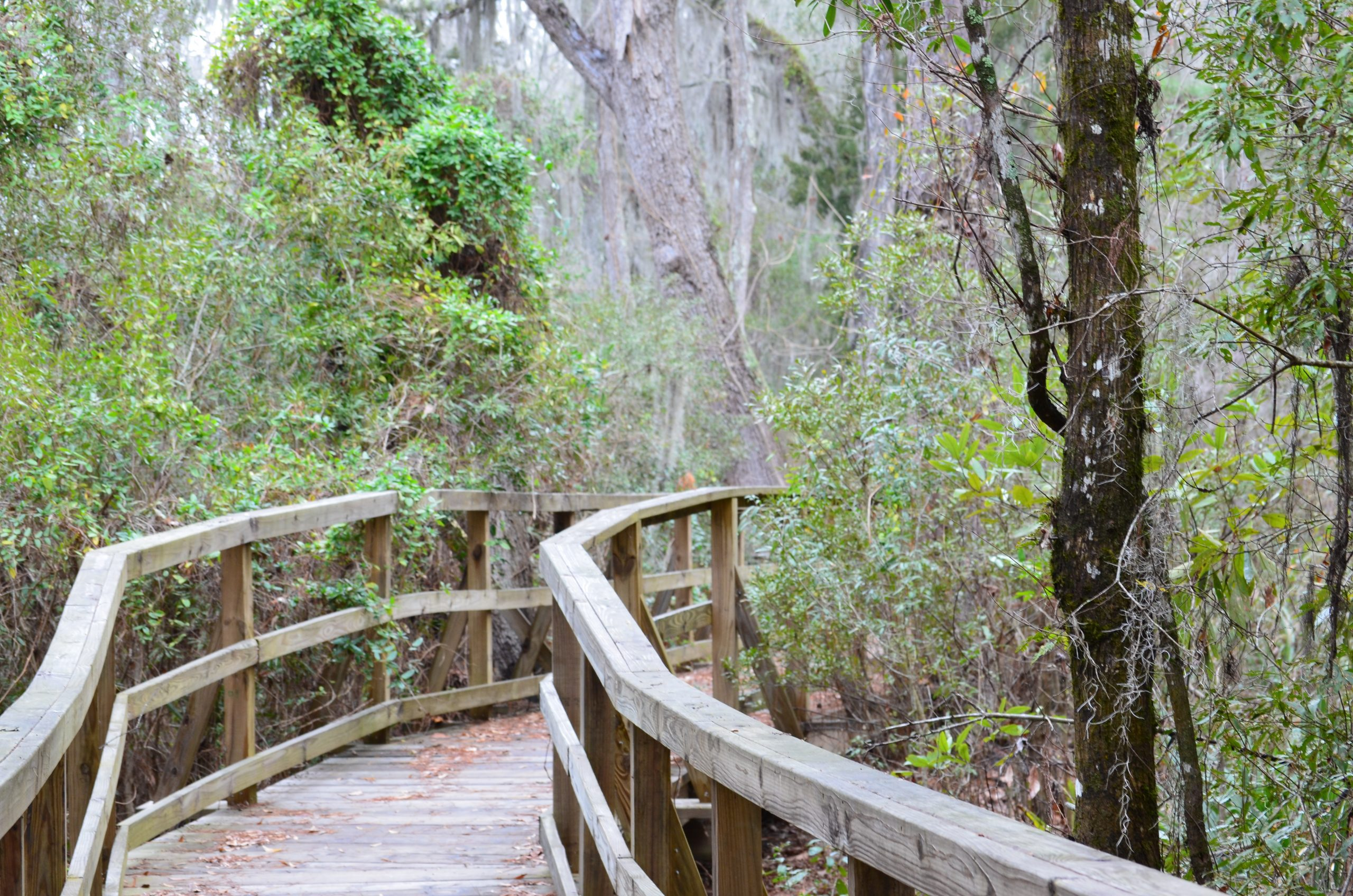 wellness in Cay Creek
